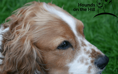 Hounds on the Hill 2021